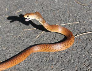 Snake I D  - SnakeOut